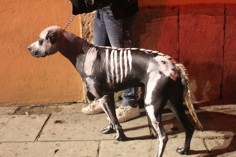In early November, don't miss Day of the Dead. Even the dogs get in costume!