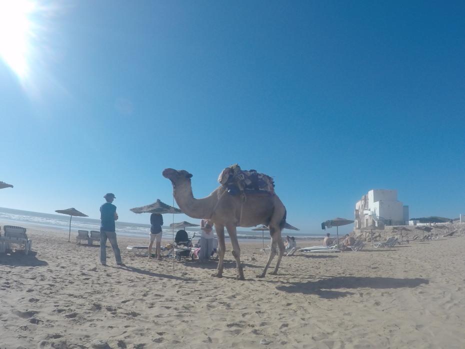 Sidi Kaouki, a beach near Essaouira