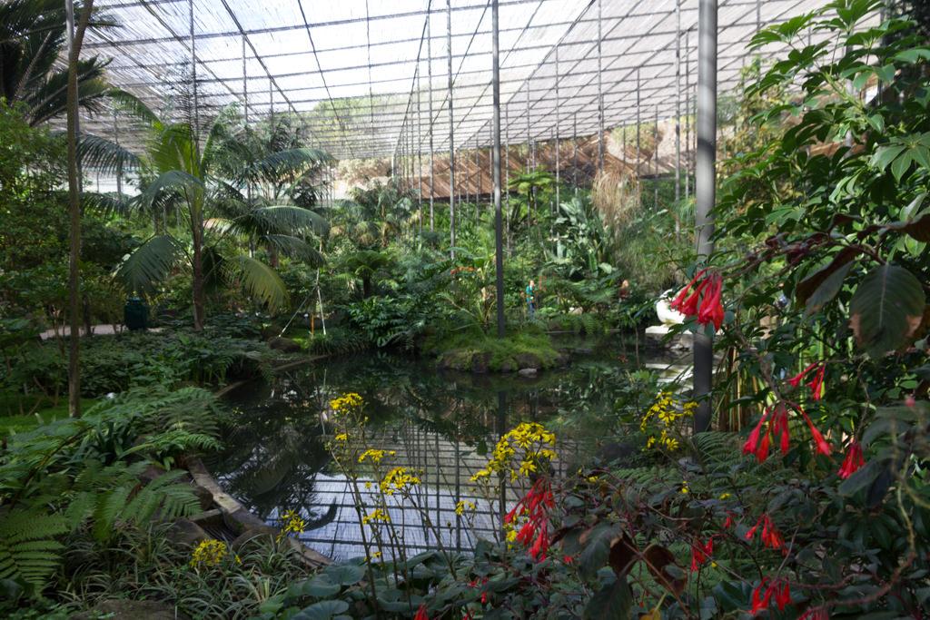 Indoor garden Estufa Fria