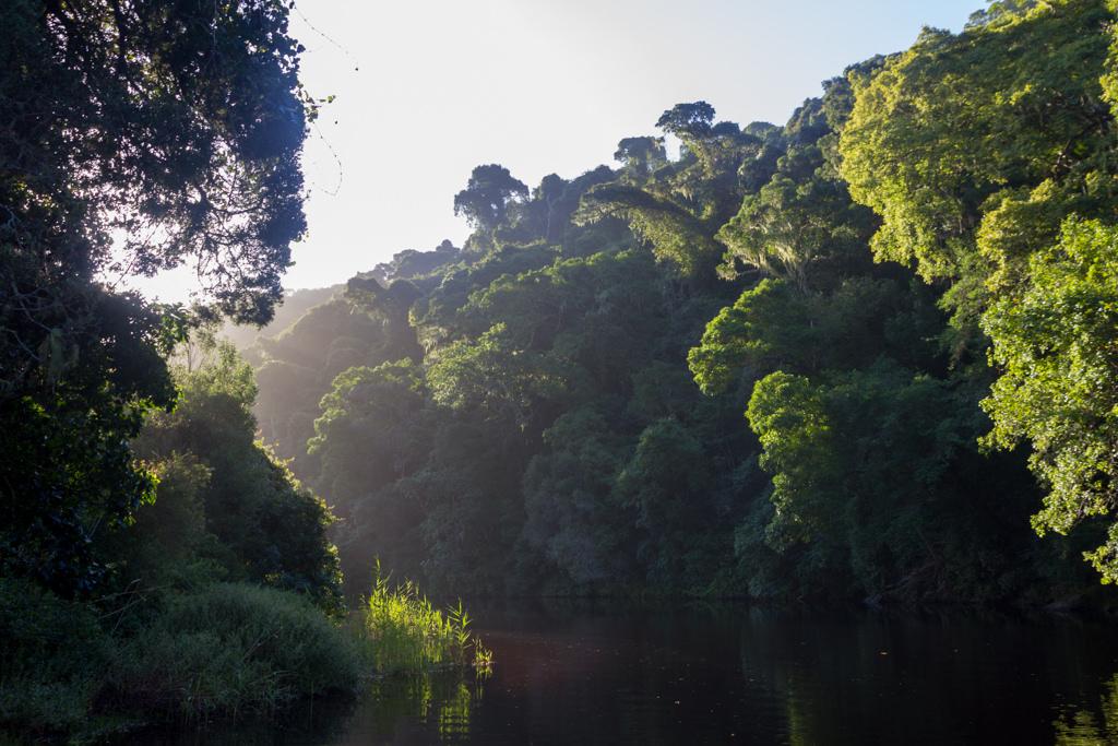 Green forest around a quiet creek in Wilderness National Park