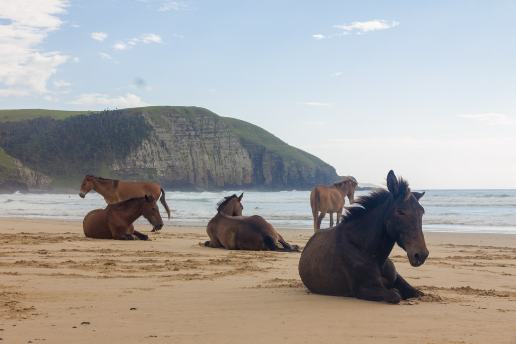 Horses resting on the beach in Coffee Bay, South Africa