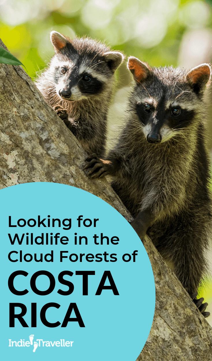 Looking for Wildlife in the Cloud Forests of Costa Rica #CostaRica #CostaRicaTravel #NatureTravel #Travel #TravelTips #SoloTravel #IndieTravel #IndieTraveller